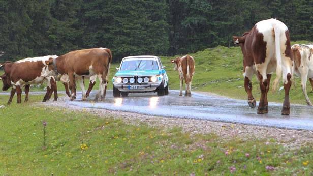 Ennstal Classic 2012 auf der Postalm/Salzburg, Rallyeteilnehmer mit Kühen