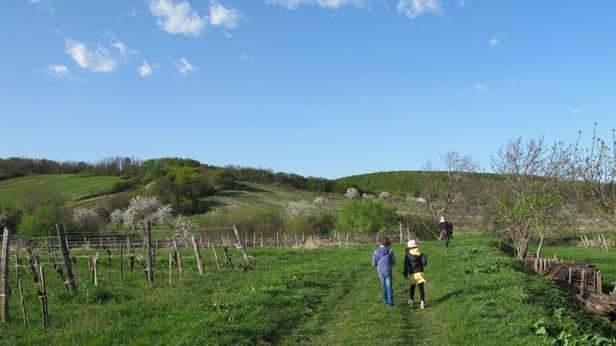 Weingarten des Kloster am Spitz