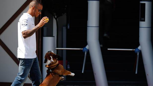 Lewis Hamilton mit Hund