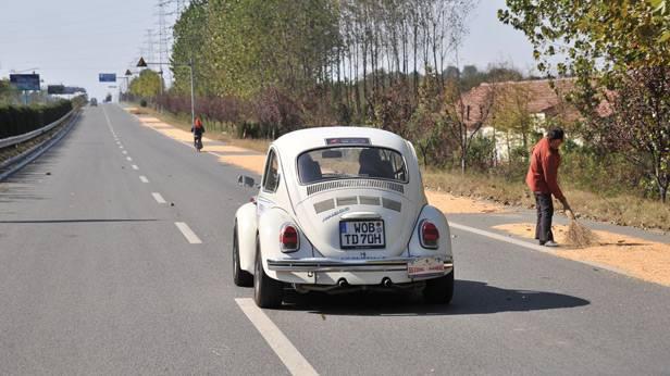 Der Käfer von hinten
