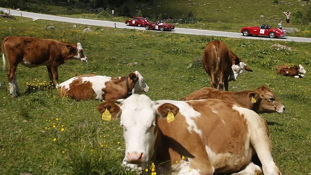 Verkehrsstatistik Österreich Verkehr in Zahlen Bundesland Ranking Wien tirol Burgenland Vorarlberg Steiermark Salzburg Oberösterreich Niederösterreich