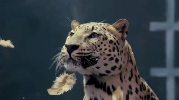 jaguar vs chicken werbung merceds jaguar