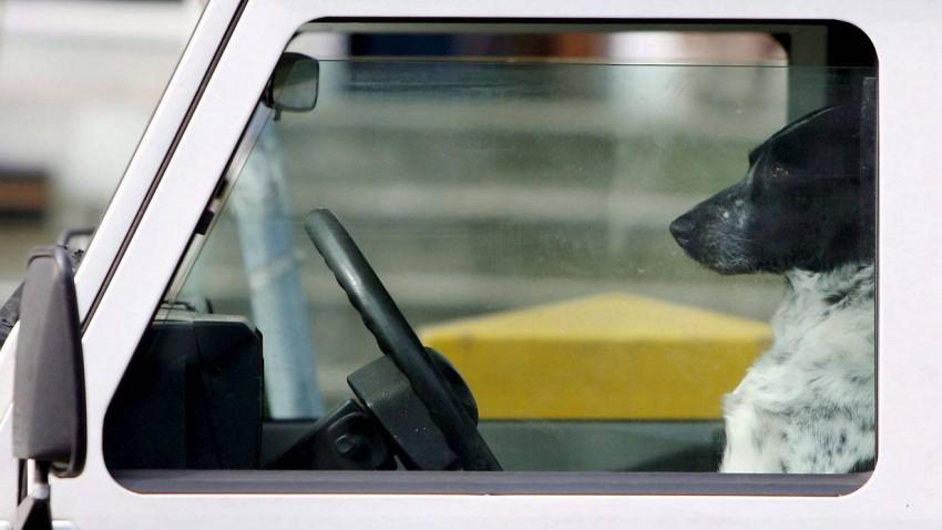 Hund am Fahrersitz