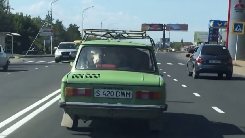 cow-car