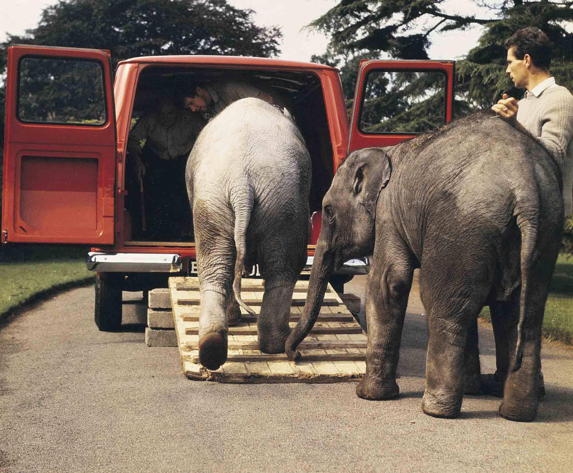 Wie bekommt man einen Elefanten in einen Ford Transit?