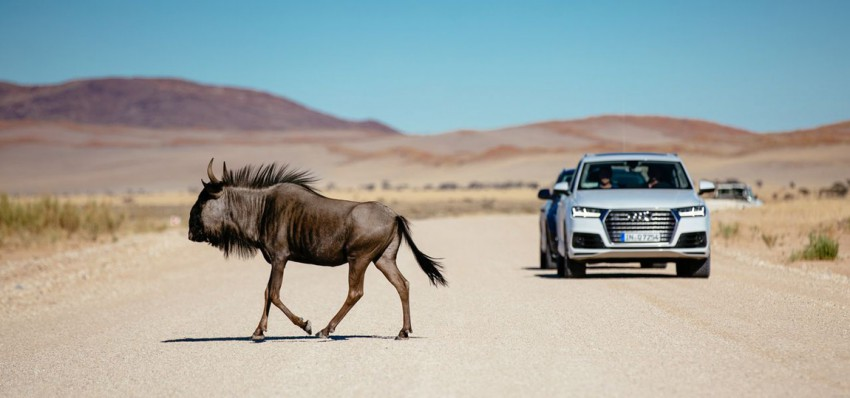 Audi-Q7-2015-20