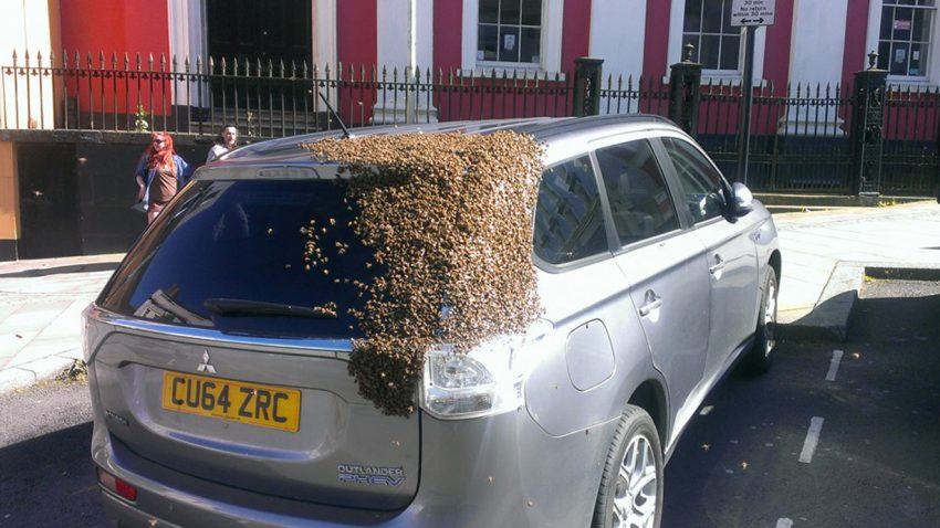Ein Mitsubishi als fahrender Bienenkorb