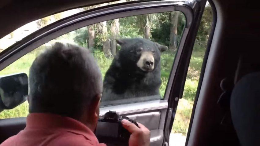 Autotüren sind nicht bärensicher