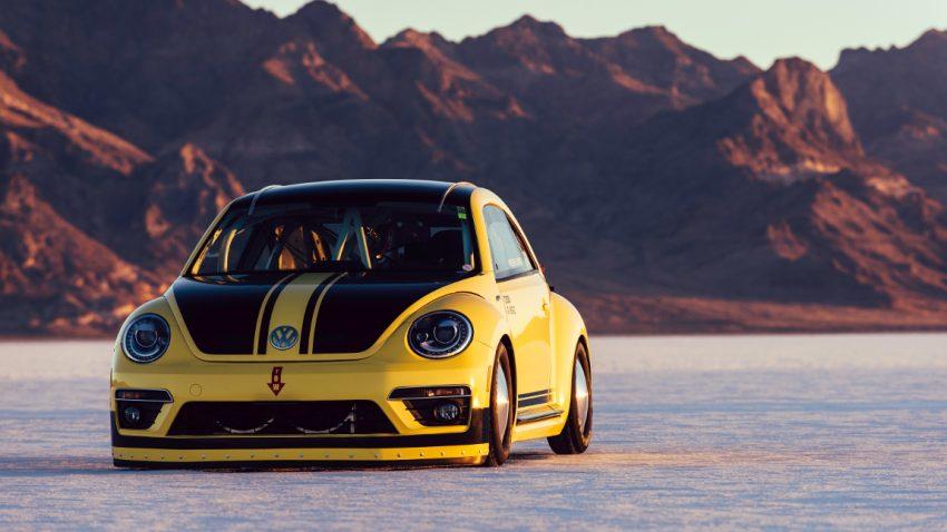 beetle-lsr-3
