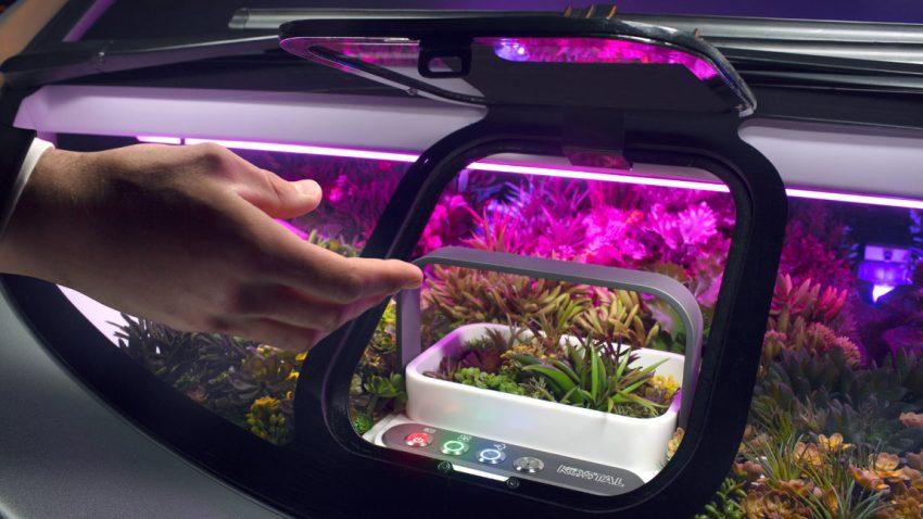 Vom zwinkernden Toyota zum fahrenden Blumenbeet: Concept Cars der CES 2017