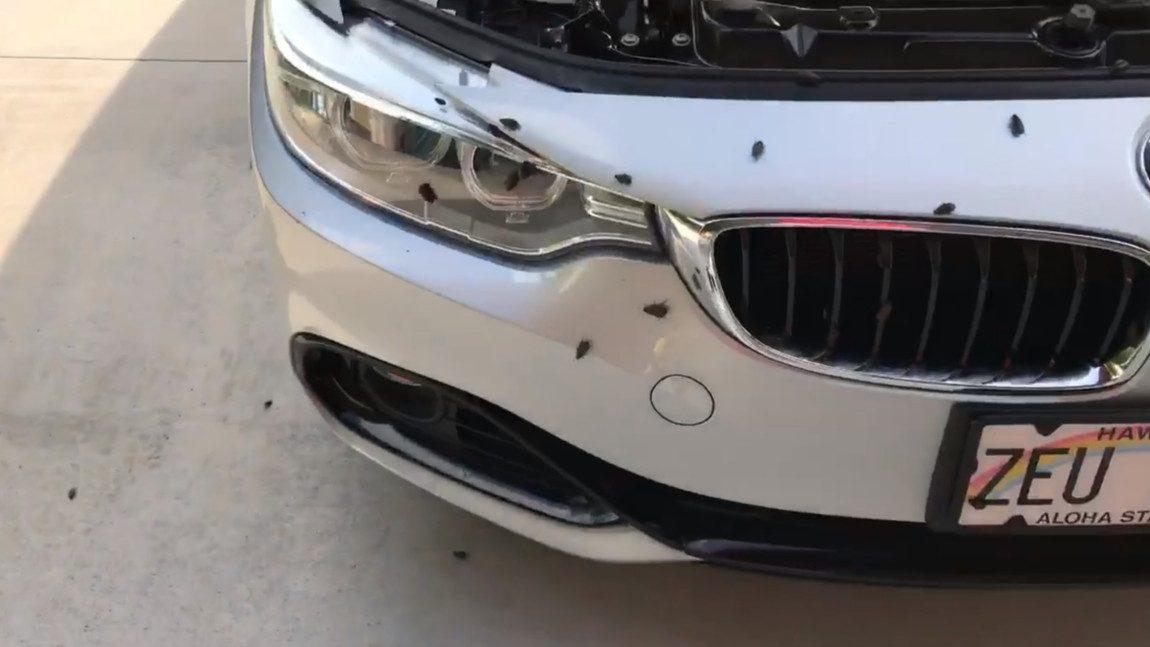 Wie dieser BMW zum Kakerlaken-Nest wurde