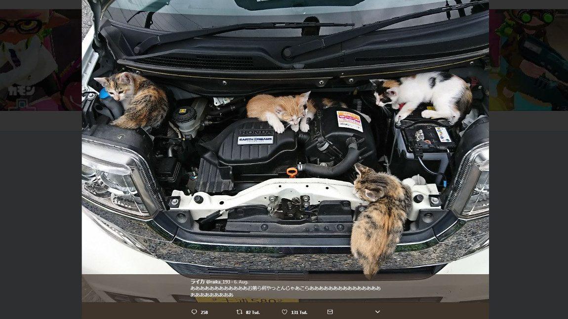 Auch Katzen lieben Autos