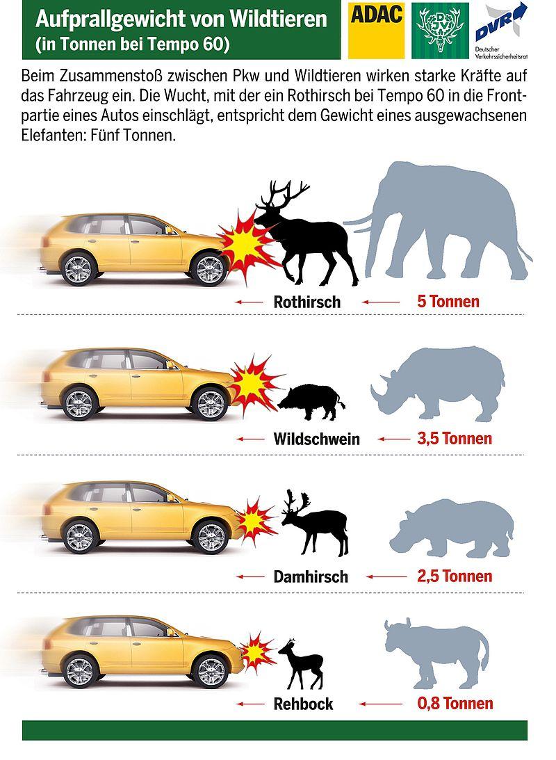 Wissenswertes rund ums Thema Wildunfall