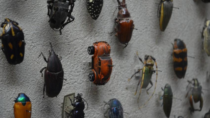 beetle museum