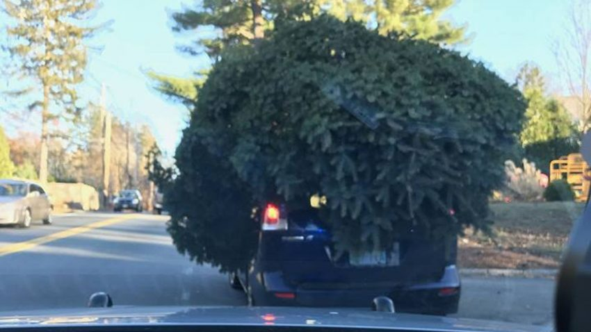 Wie man seinen Christbaum NICHT transportieren sollte