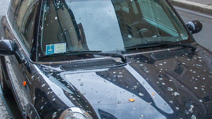 Vogelkot, Baumharz & Co vom Auto entfernen