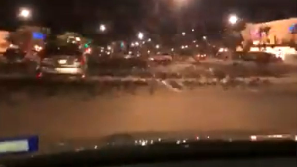 Dieser Autofahrer versucht, einen Schwarm Vögel zu überfahren