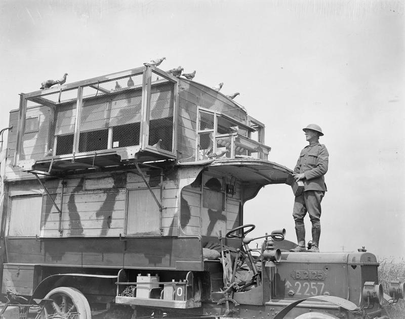 Brieftauben erster Weltkrieg mobiler Taubenschlag