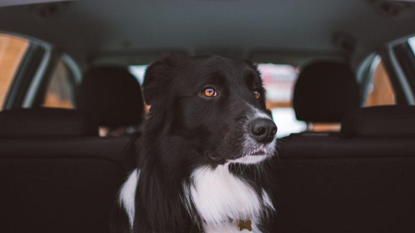 Tipps für Urlaubsfahrten mit Hund [Einreisebestimmungen, Transportsysteme]