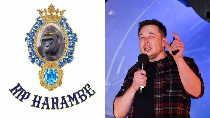 Tesla-Chef Elon Musk veröffentlicht Rap-Song über erschossenen Gorilla Harambe