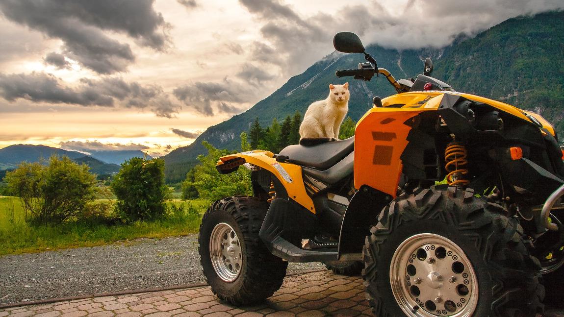Quad & ATV in Österreich: Alle Infos im Überblick