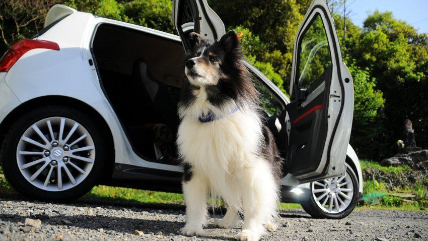 Hundebox fürs Auto: Worauf man achten muss